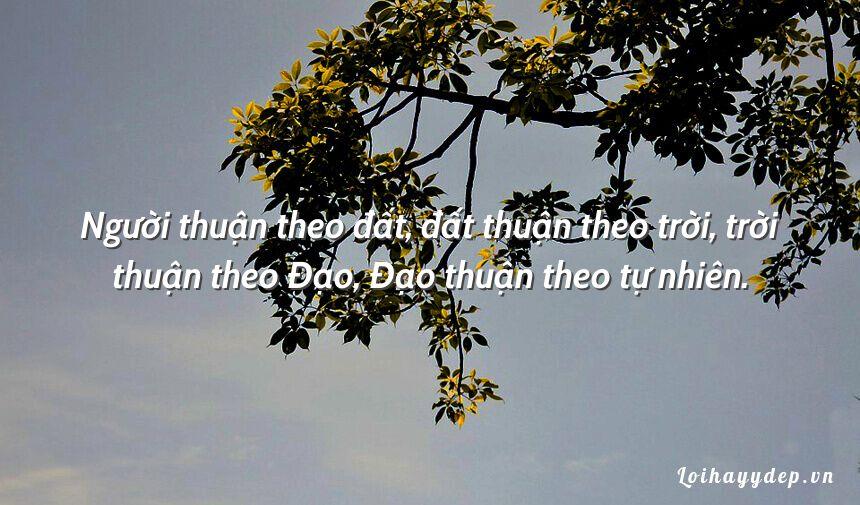 Người thuận theo đất, đất thuận theo trời, trời thuận theo Đạo, Đạo thuận theo tự nhiên.